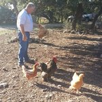 David and Chickens