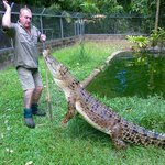 Lync-Haven Rainforest Retreat, Cabins, Camping & Wildlife Experienceの写真