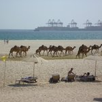 Sunbathers, camels and the port in the distance.....