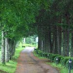 Tree lined road to hotel