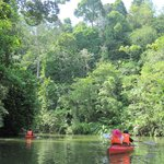 Foto Borneo Tropical Rainforest Resort