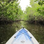 Paddling through the Mangrove Forest