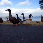 Belmont Pines Lakeside Holiday Park의 사진
