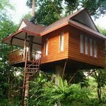 Tree House or Deluxe room