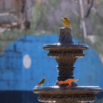 I enjoyed the variety of birds that bathed at the fountain every morning!