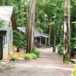 Surfs Inn Rainforest Cottages And Guesthouse