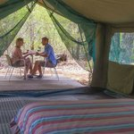 Basic Safari Tents just $85 per night