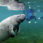 Swim and Snorkeling with the Manatees
