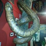 Come and meet our huge python in the Palmer Room!