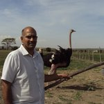 This ostrich was quite hostile to visitors