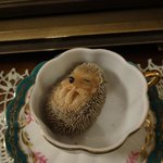 Baby Hedgehog :)  There are lots of ornaments and decorations in every corner of every room