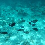 Coral Gardens (2nd stop)...like swimming in an aquarium.