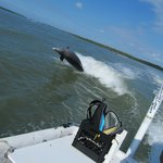 One of several dolphins caught behind our boat