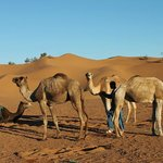 Camel excursion