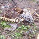 these bones are right behind the smoking hut (wooden hut) near the front door