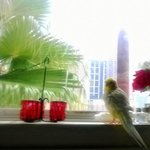My birdy loves the view!
