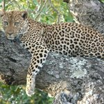 Thornybush Waterside Lodge resmi