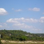 baga fields - sky full of Brahminy kites