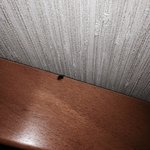 The bug that was in our room