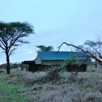 Photo of Ang'ata Camp Serengeti