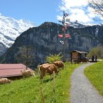 Photo de Pension Gimmelwald