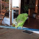 Alice the hotel parrot