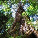 Forest Guided Tours