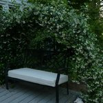 An arch of Confederate jasmine for a romantic spot.