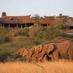 Watering hole in front of ol Donyo Lodge