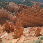 Bryce Canyon Pines Foto