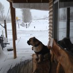 Travelin' Jack watching the Snow fall from the Porch Bench.