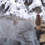 Snow monkey tour organized through nozawa holidays