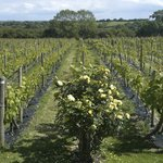 Photo de Glyndwr Vineyard