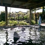 Waikite Valley Thermal Pools Foto