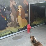 Disneyland Kennel