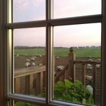 view outside the garden room