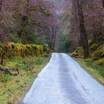 The road to Loch Arkaig