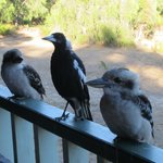 Visitors to the verandah