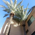 Foto de Courtyard by Marriott Tucson Airport
