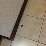 Dead roach in the bathroom