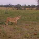 Foto de Mongena Game Lodge