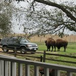 Bilde fra Texas Ranch Life Accommodation