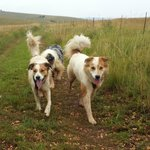 Paddington and Whiskey: Off lead fun on the 5km walk
