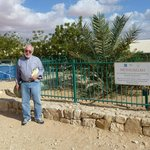 The Methuselah Tree, a Judean Date Palm germinated from a 2000 year old seed