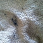 Black stuff on bed blanket