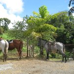 The Stable Arenal (El Establo)照片