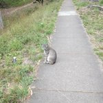 A bobcat on the path!