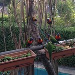 feeding the rainbow lorikeets during breakfast