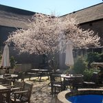 Spring blossom on the sun terrace