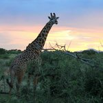 Dream Kenya Safaris - Day Trips Foto